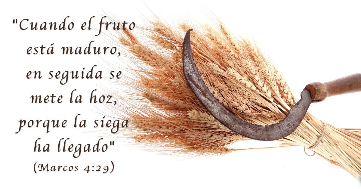 La Hoz En La Biblia Sugiere Juicio Esto Nos Recuerda Que Jesucristo Vino La Primera Vez A Esta Tierra Para Sembrar La Palabra Pero Volverá Un Bible Inspiration