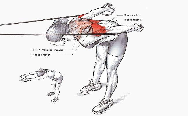 Dos ejercicios básicos para los brazos | Natación | Triatlonweb.es
