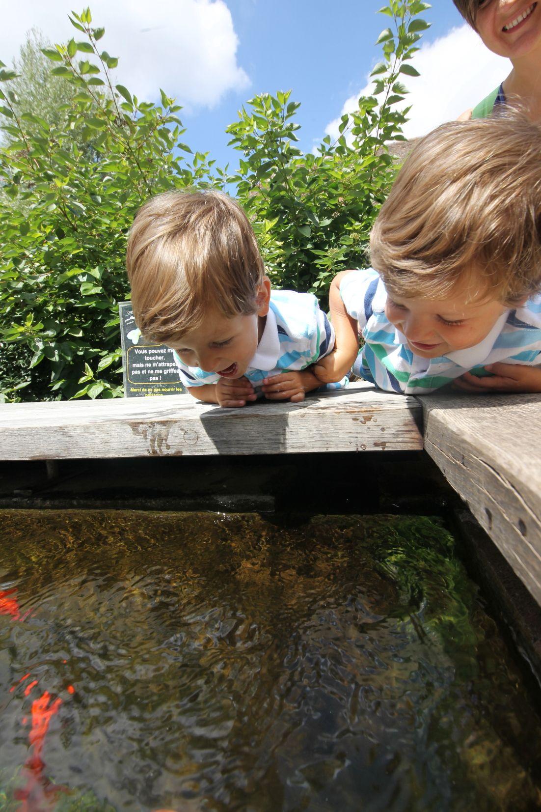 Bassin A Poisson Rouge la bassin des poissons rouges : encore un incontournable