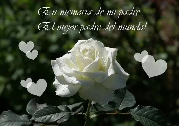 Imagenes De Duelo Con Rosas Blancas Descanse En Paz Frases Imagenes Dia Del Padre Frases De Amor Puro