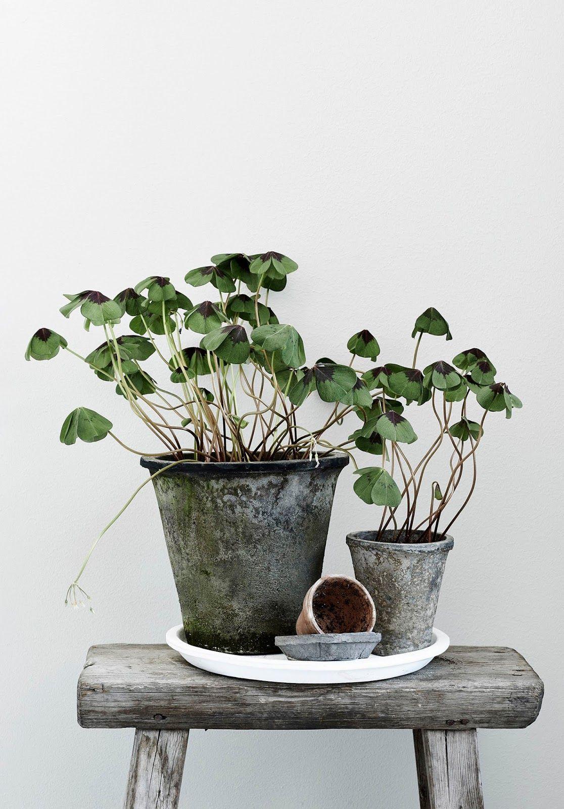 lis vihreit kuvia kirja l htee wohnen mit pflanzen. Black Bedroom Furniture Sets. Home Design Ideas