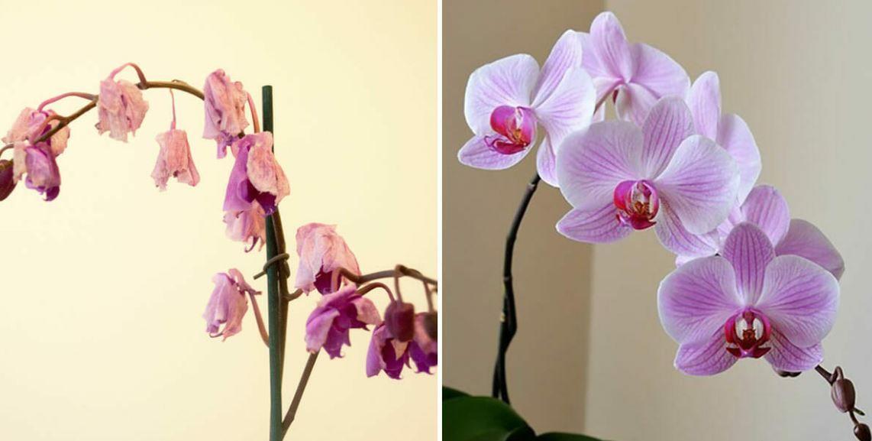 Dbanie O Rosliny To Prawdziwa Sztuka Co Kwiat To Inne Upodobania Jedne Potrzebuja Wiecej Swiatla Odpowiedniej Ziemi A Jeszcze In Orchids Bloom Orchid Care