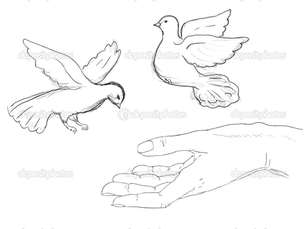 Uncategorized How To Draw Birds Flying birds flying google search 14 bird song pinterest how to draw a bird