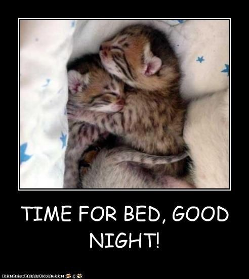 Time For Bed Goodnight Quotes Cute Quote Night Goodnight Good Night Goodnight Quotes Good Nite Goodnight Quote Cute Good Night Good Night Cat Good Night