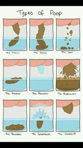 Types of poo! I find toilet humor funny!! Pun intended!!