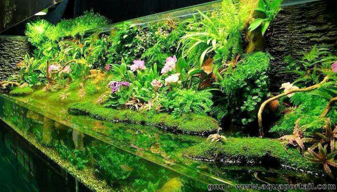 Le paludarium qu 39 est ce que c 39 est mur vegetal for Mur vegetal aquarium