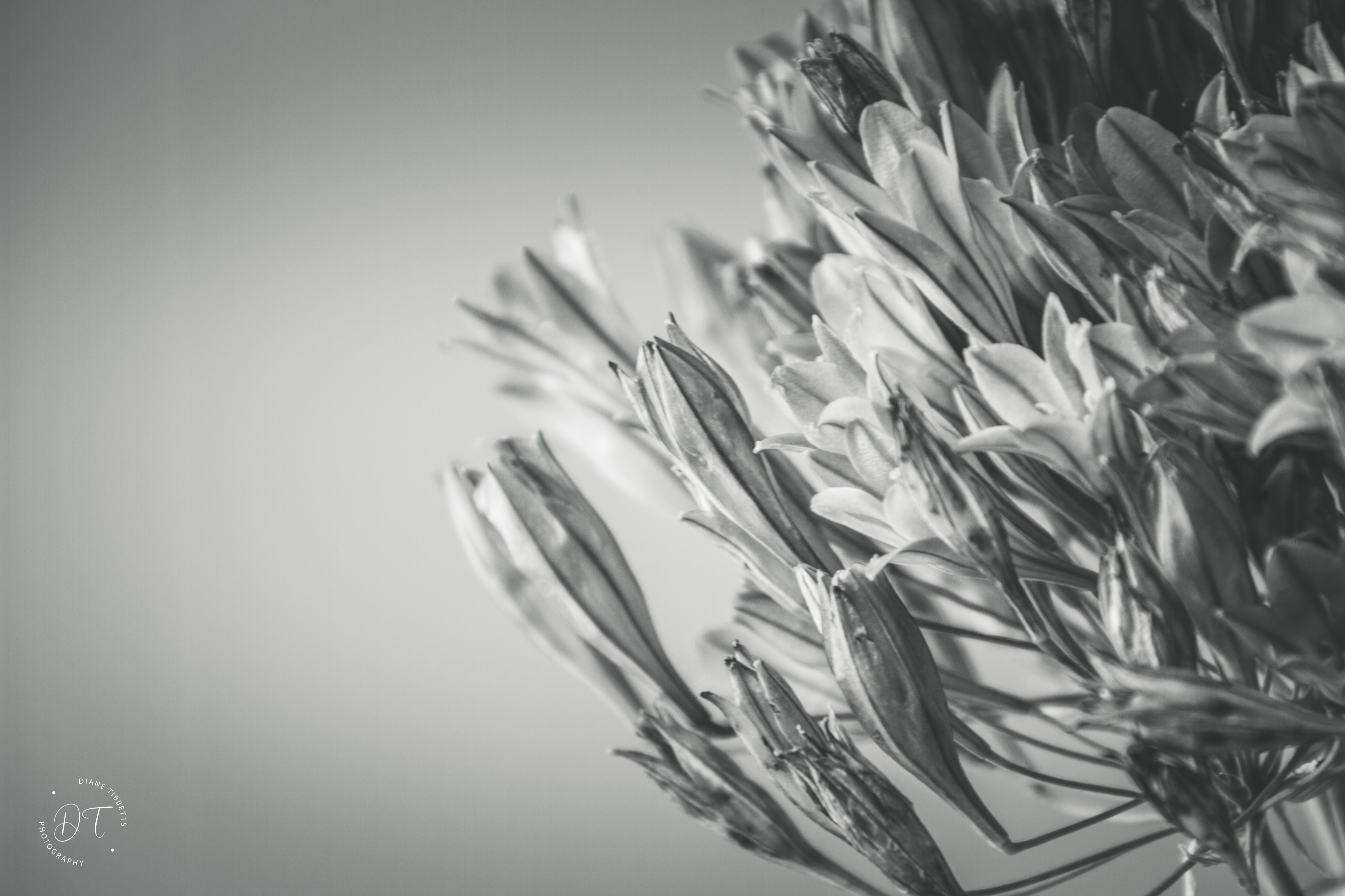 #wildflowers #blackandwhitephotography