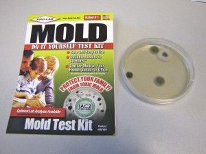 Home Mold Test Kits Vs Professional Testing