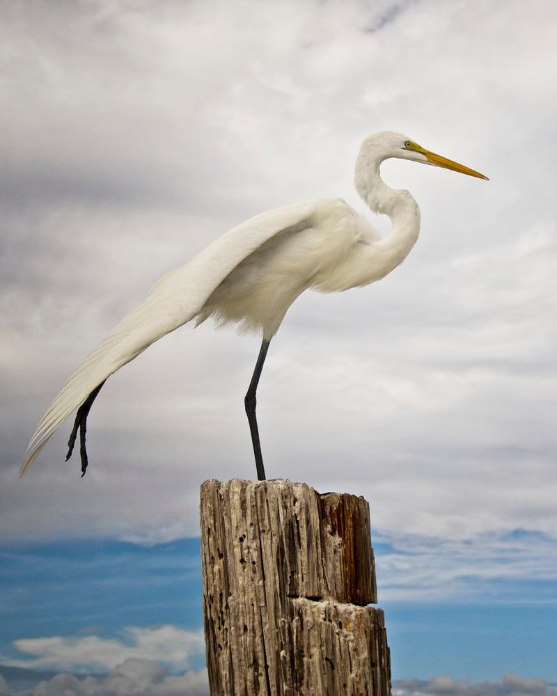 Craigslist Fort Myers Beach Pets - Wayang Pets