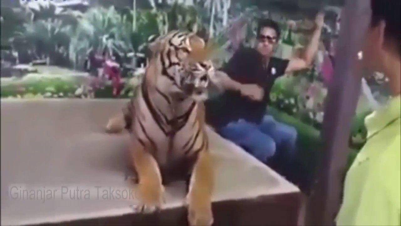 KUMPULAN VIDEO LUCU TERBARU 2016 Cobalah Untuk Tidak Tertawa