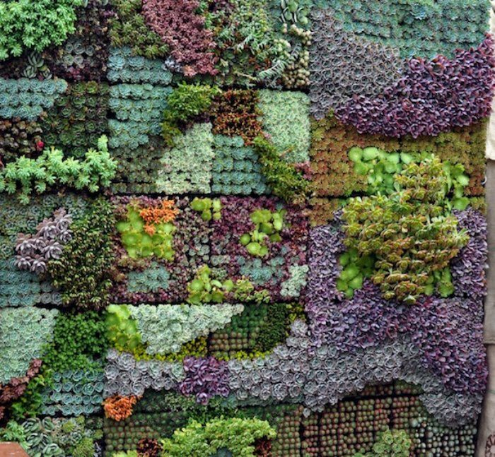 Succulent mosaic vertical garden by sgplants sgplants for Garden wall mosaic designs