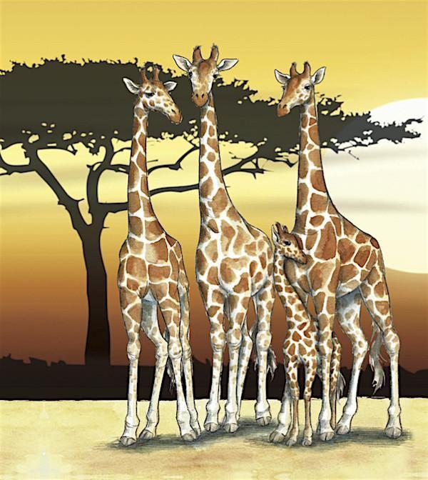 Giraffe, Cute Giraffe, Animals Beautiful