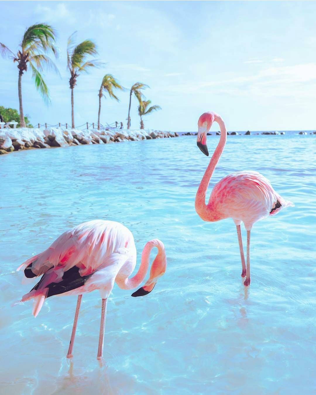 flamingo party | Glitbit TROPICAL VIBES | Flamingo ...