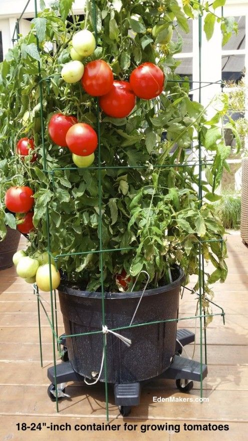 Patio tomato plant containers for more organic gardening for Ideas for tomatoes from the garden