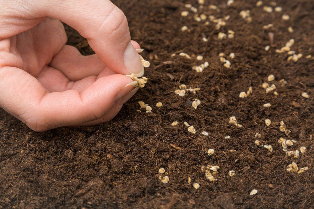 How seed libraries can help you grow your own veggies for