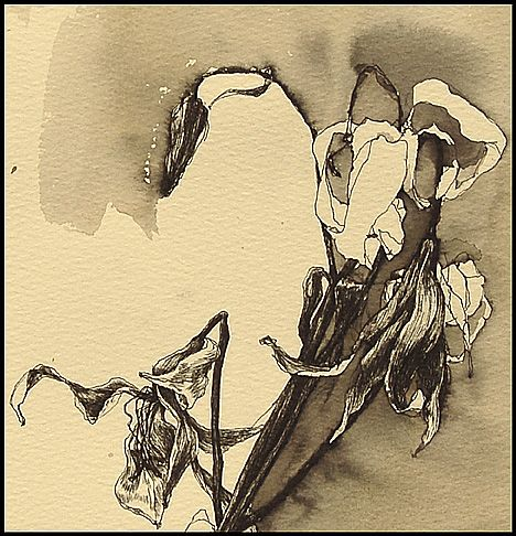 """Helen Gotlib - """"Snow"""" Pen,ink and tea on white paper ~18""""x10"""""""