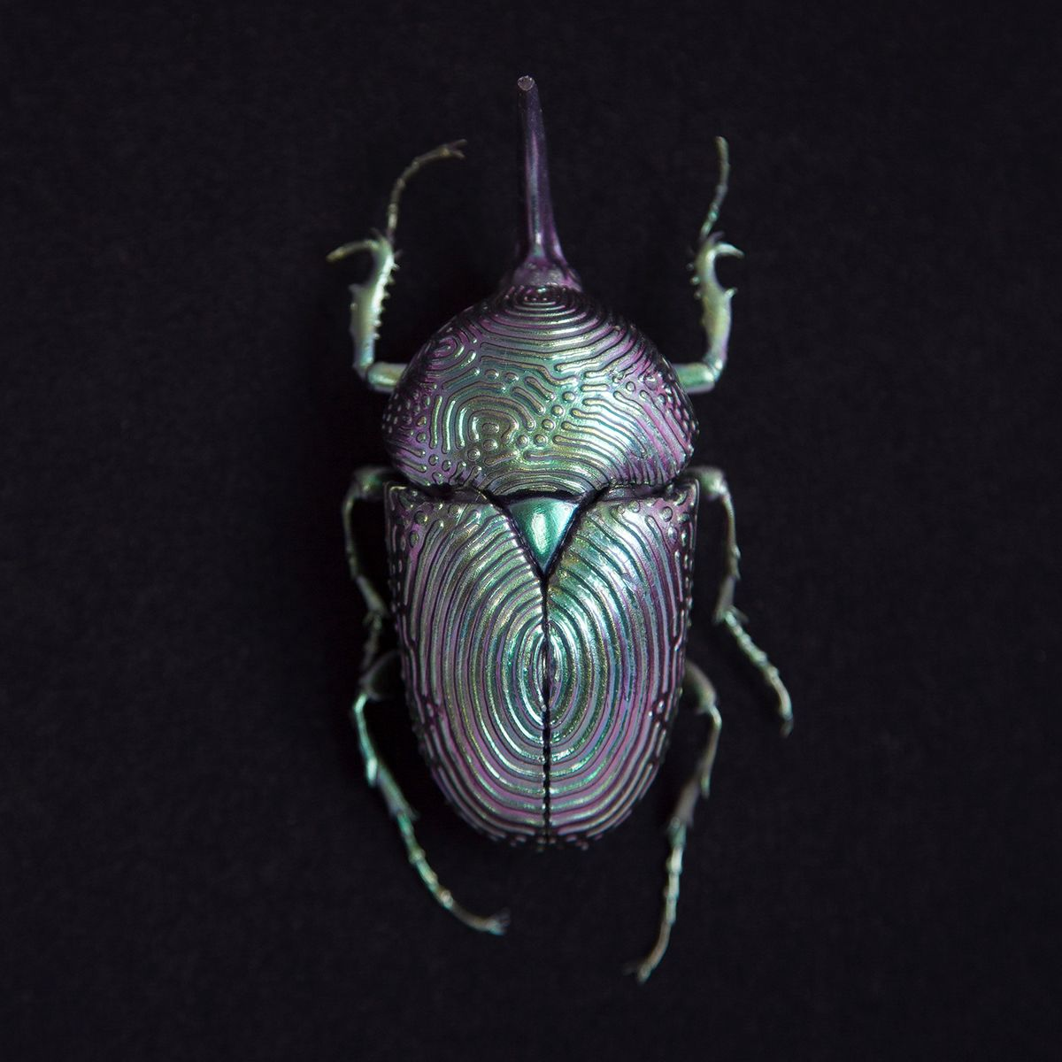 ジラフアサシンバグ Insects