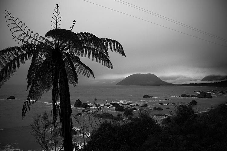 Tree Fern, at Jackson Bay, see more, learn more, at New Zealand Journeys app for iPad www.gopix.co.nz