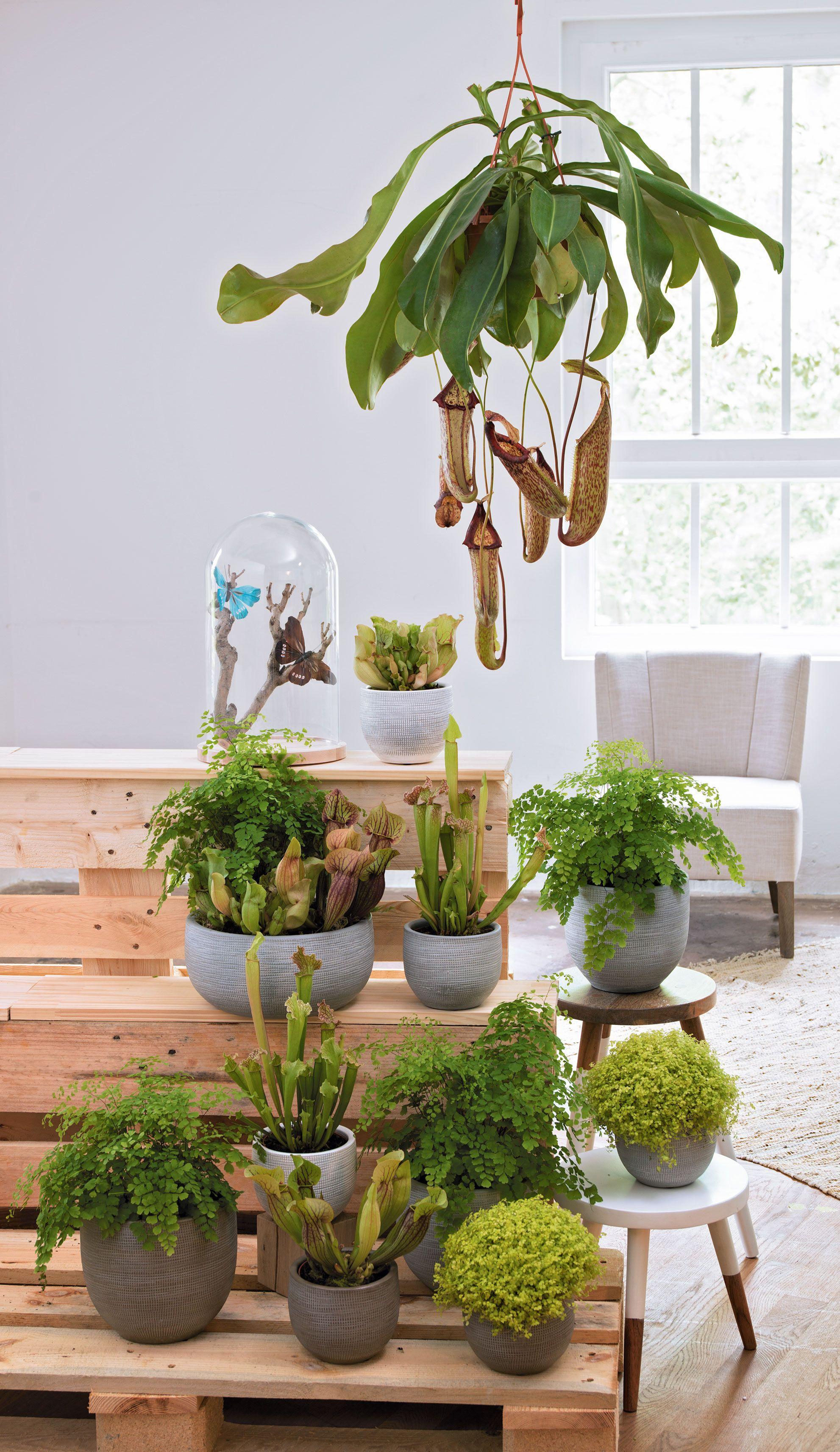 sublimez votre int rieur avec des plantes carnivores crazy plant lady pinte. Black Bedroom Furniture Sets. Home Design Ideas