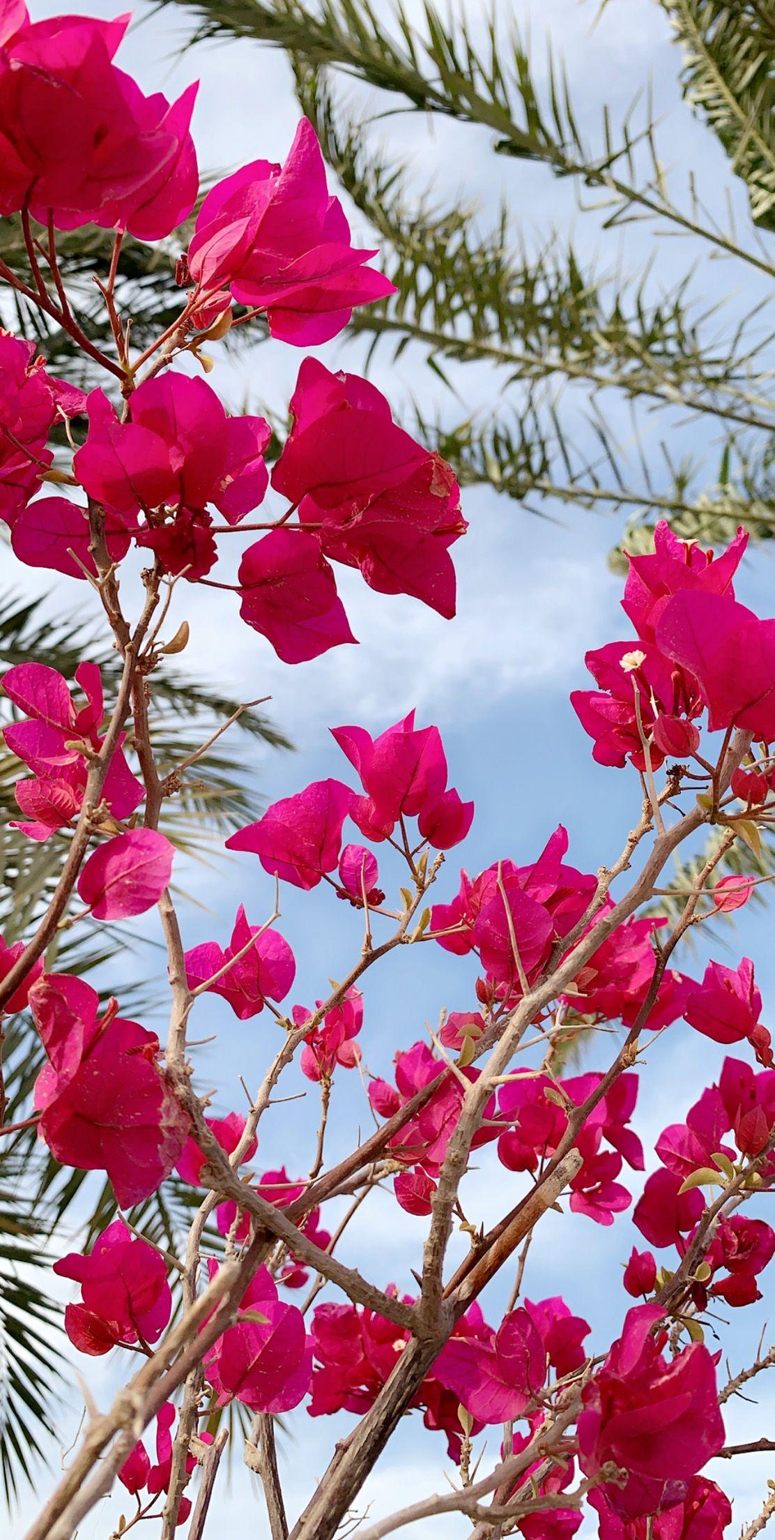 Pin By بثينة الكواري On ورد الربيع Flowers Rose Plants