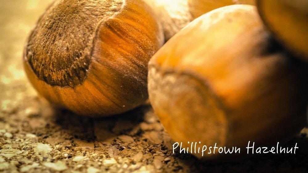 Hazelnut How to roast hazelnuts, Nutrition articles, No