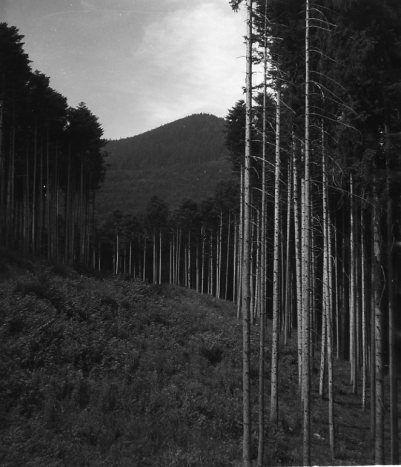 DOISNEAU Robert, La forêt entre St Odile et les ruines du château d'Andlau, photographie, 1945