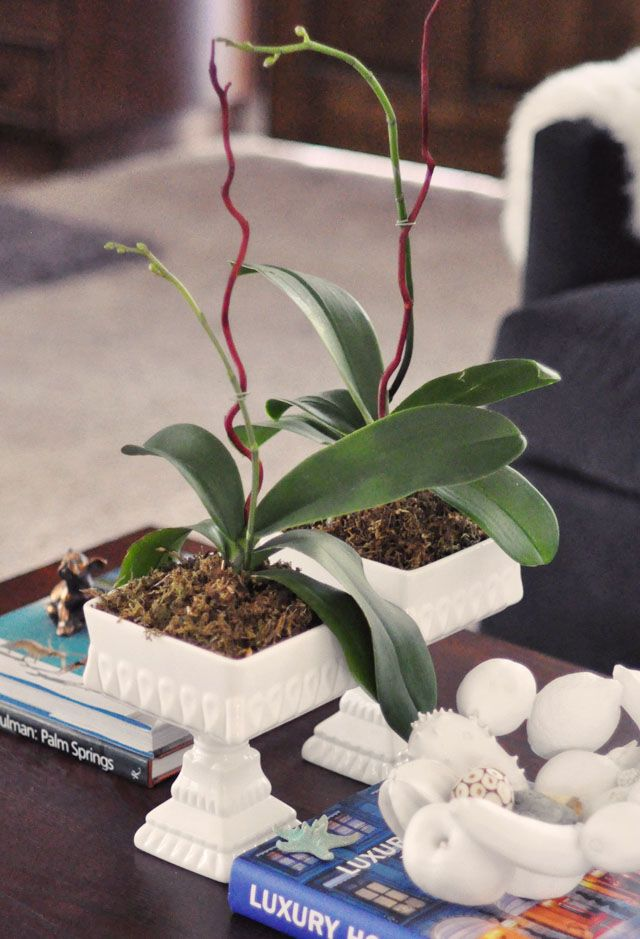 How To Replant And Regrow Orchids How To Replant Orchids Happy Flowers Orchid Care