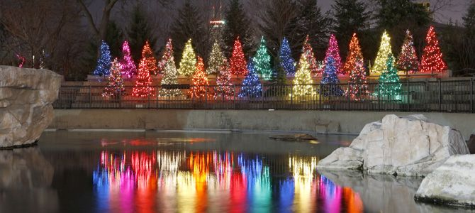 Lincoln Park ZooLights Photo