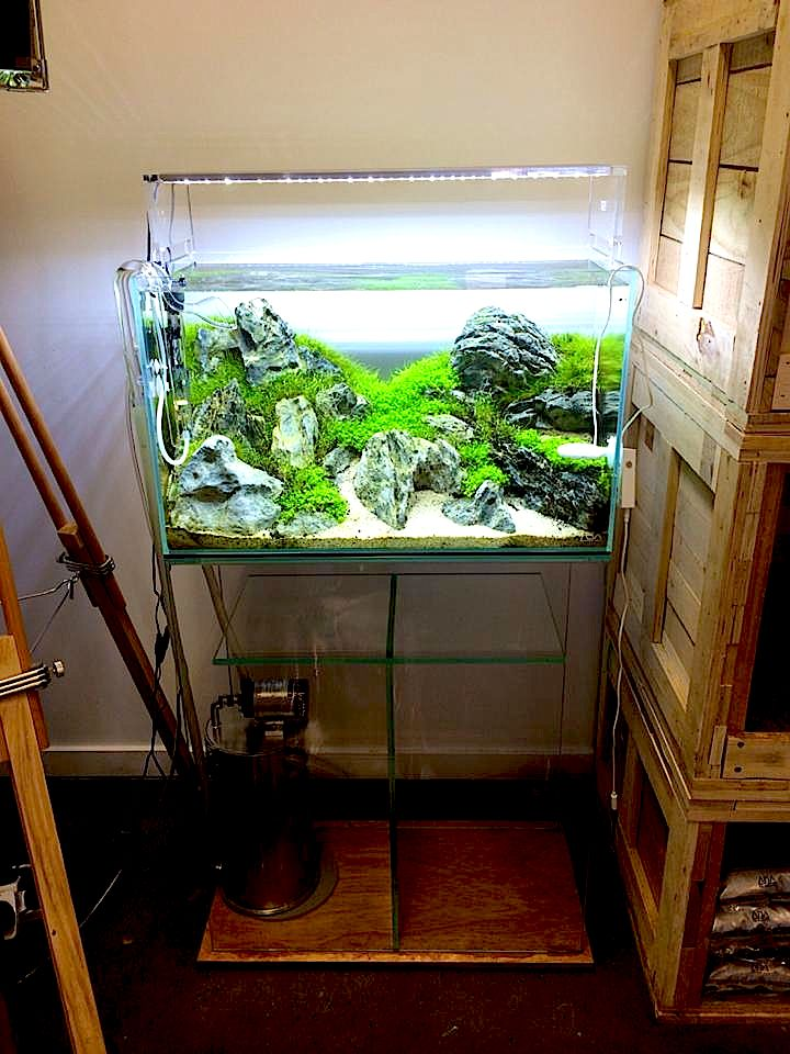 Ada setup iwagumi scape planted aquaria inspiration for Ada fish tank