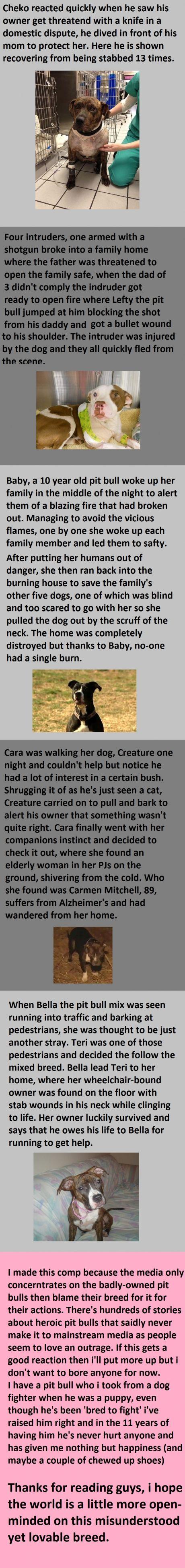 142 best amazing dogs images on pinterest amazing dogs a dog