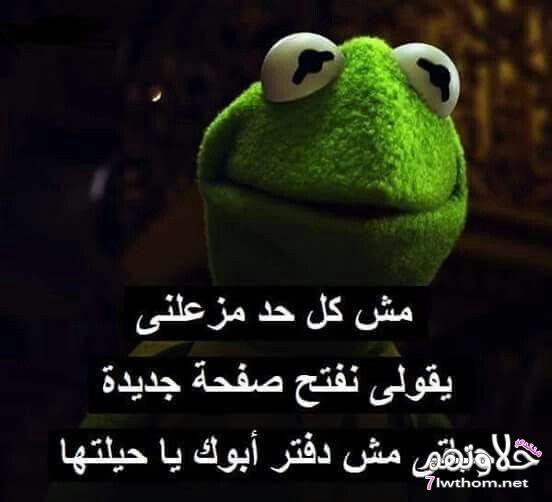 صور مضحكة الضفدع كيرميت كومنتات مصورة مضحكة اضحك مع كرميت Funny Cartoon Quotes Arabic Funny Funny Arabic Quotes