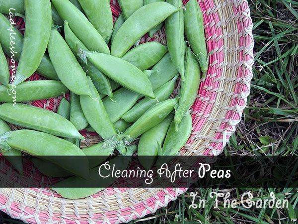 How to Clean After Peas in The Garden – What You Need To Know | Lady Lee's Home