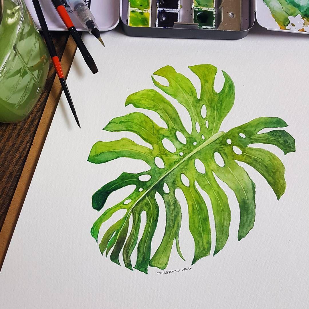 Watercolor Illustration Monstera •••• watercolor painting ...