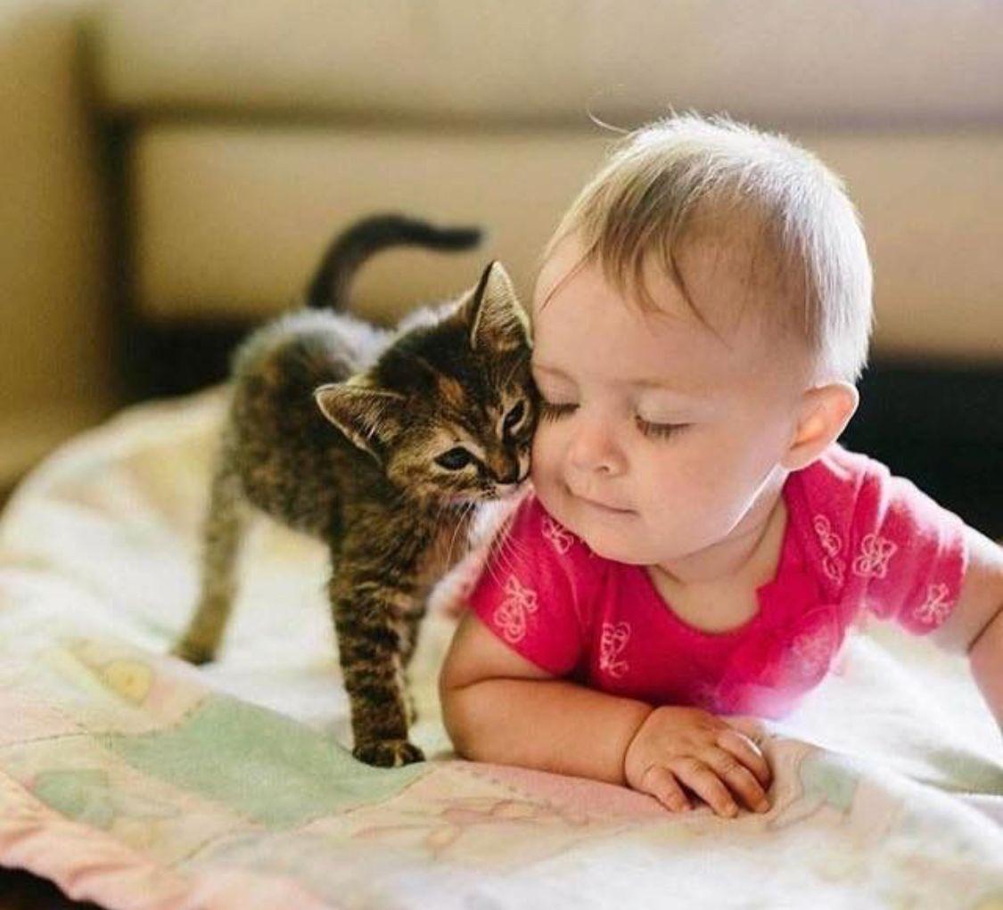 Kitty Kat Kisses Katzen Kinder Tiere Hundebabys