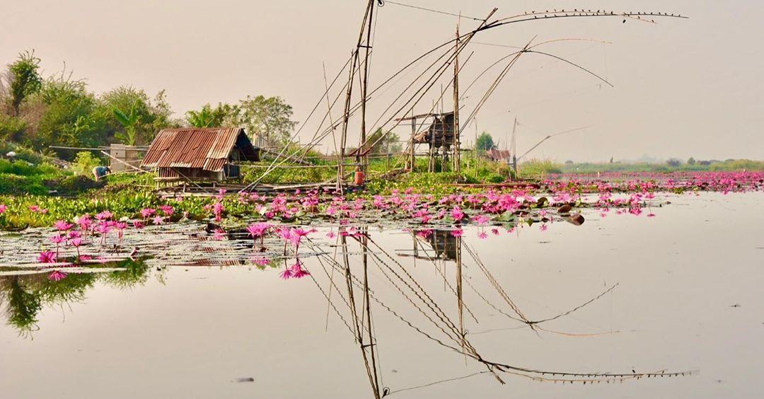 #mirrorpic #twoside #beautifullikeapainting #readlotus #nymphaealotus #lotus #flowers #udonthani #thailand #local #river...