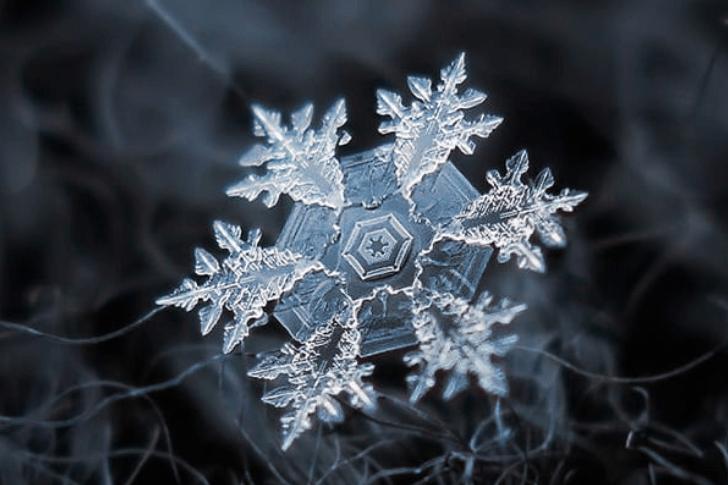 Acredite Ou Não Estas Fotos Da Natureza São Completamente Reais Page 23 Of 34 Editor Choice Copos De Nieve Reales Copos De Nieve Macrofotografia