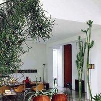 Un salon vintage rempli de plantes