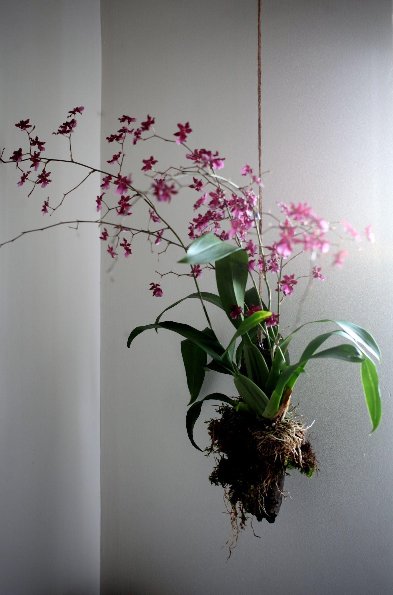 All Gardenista Garden Design Inspiration Stories in One Place | De ...