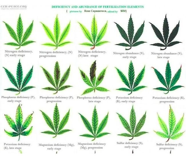 Plant Nutrient Deficiency Leaf Illustrations And Charts Reference