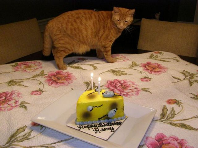 I Want To Make My Cat A Birthday Cake
