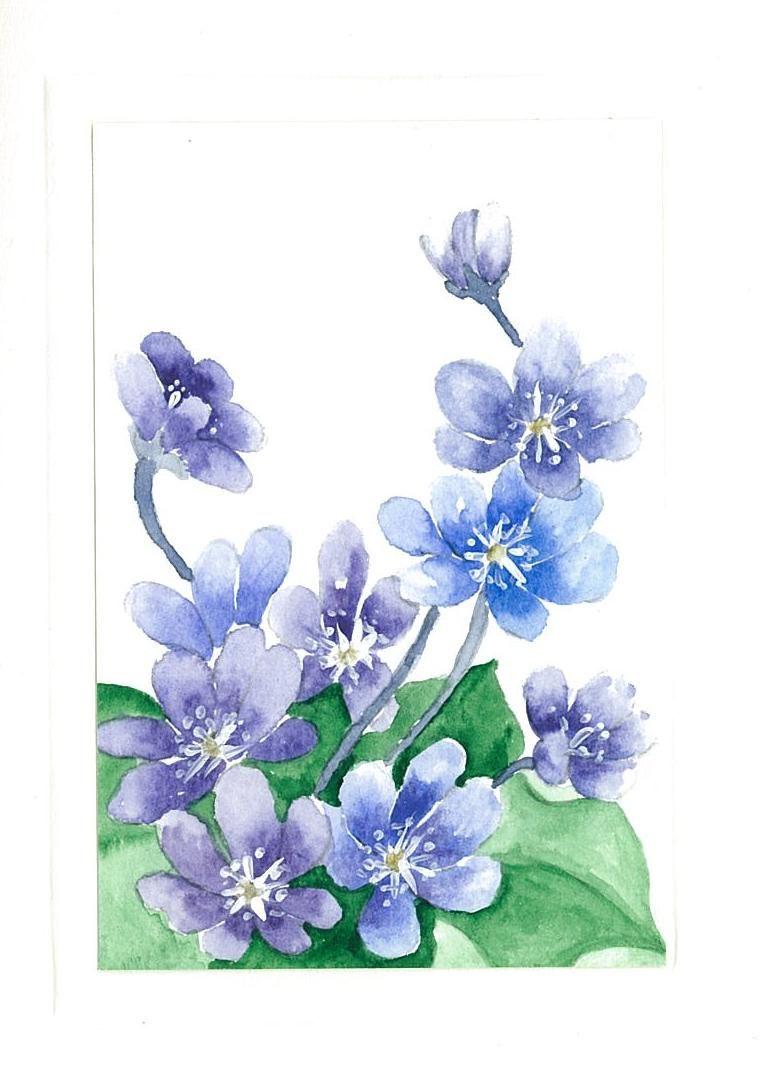 Hepatica my works watercolor paintings birthday cards hepatica watercolor paintingsdesign artbirthday cardsgreeting bookmarktalkfo Gallery