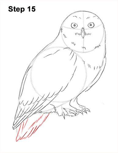 Snowy Owl Drawing 15   art   Owl watercolor, Owl sketch