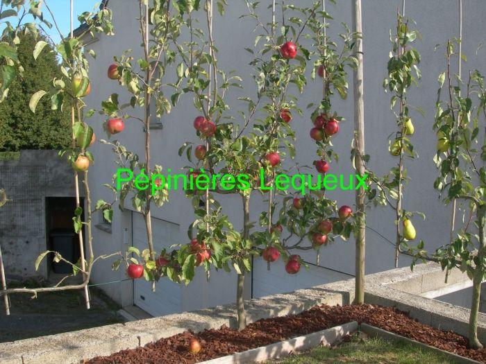 pommier paliss recherche google amenagement fond du jardin pinterest pommier recherche. Black Bedroom Furniture Sets. Home Design Ideas