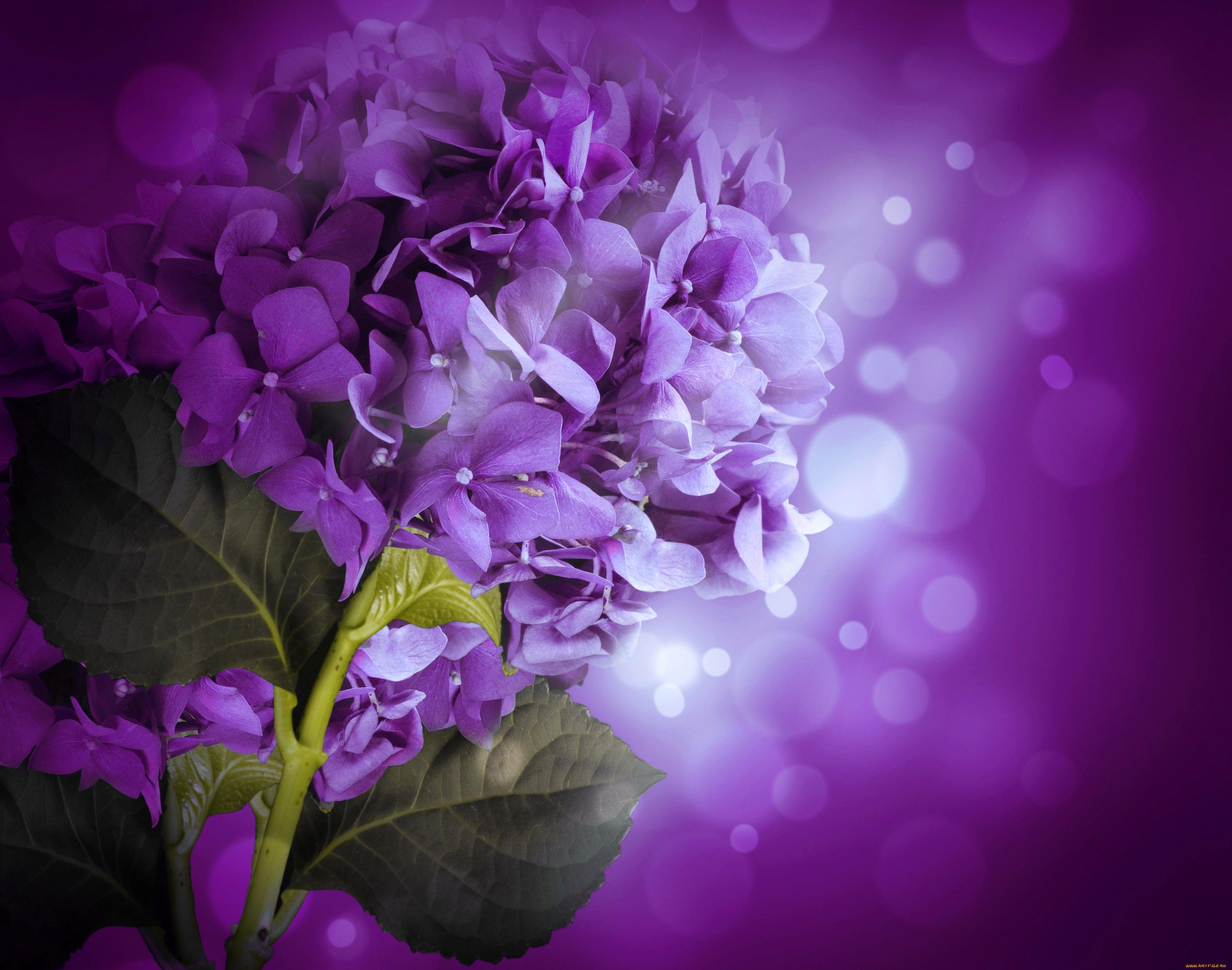 даже фиолетовые сиреневые картинки желании можно