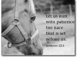 Horse & verse | Zebra Print Takeover | Bible quotes ...
