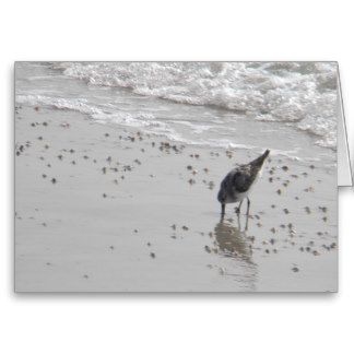 sandpiper and coquina clams cards