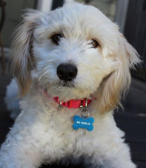 Dog Adoption Finding Your Perfect Pup Dog Adoption Dog Breeder Dog Rescue Groups