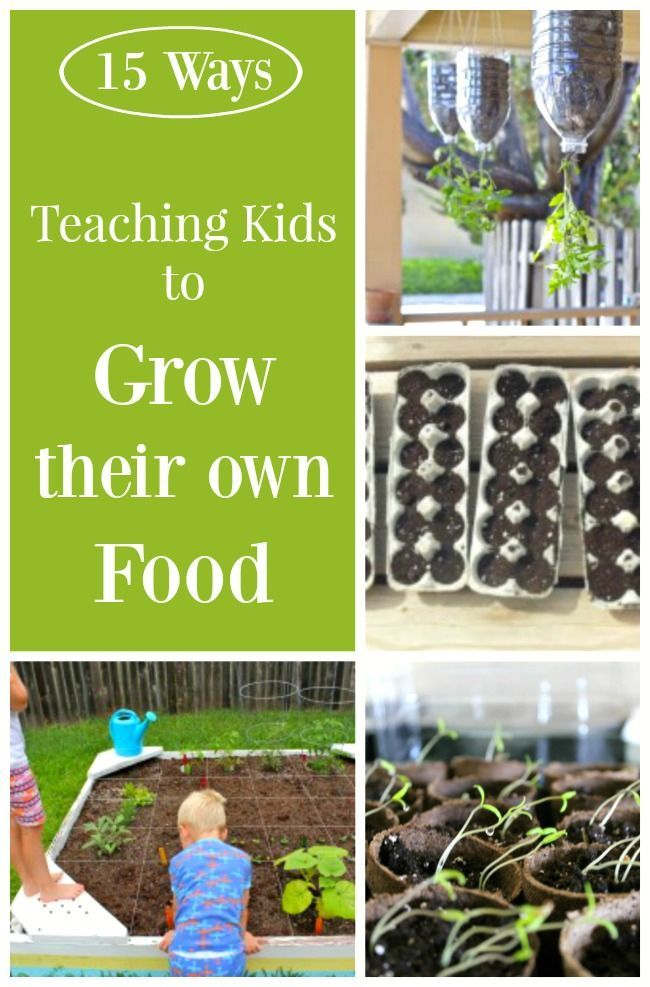 Garden fun teaching kids to grow their own food for Indoor gardening lesson