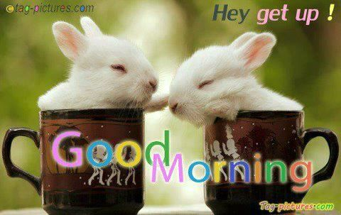 Good Morning Beautiful Rabbits Http Ift Tt 2e0npxu Cute Good Morning Images Cute Good Morning Good Morning Images Hd