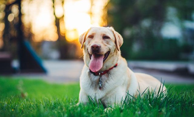 5 Tips For Shooting Better Photos Of Your Dog Or Cat Pet Photography Tips Animal Photography Dog Photos